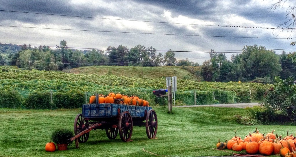 Pumpkins in a Wagon in Vermont